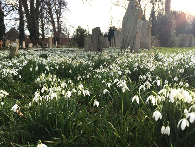 Snowdrops and Aconites Uffington
