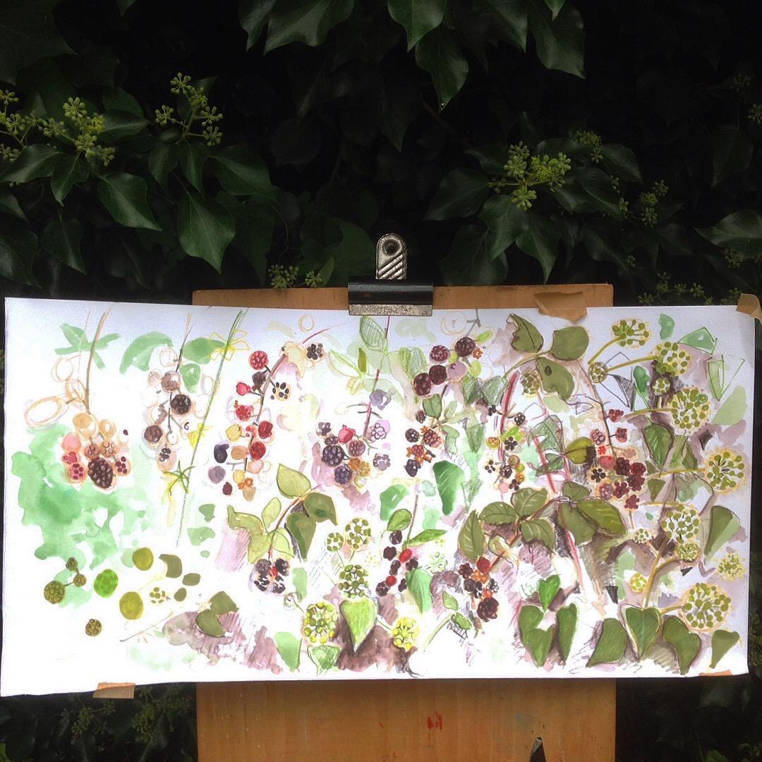 Blackberries and Ivy