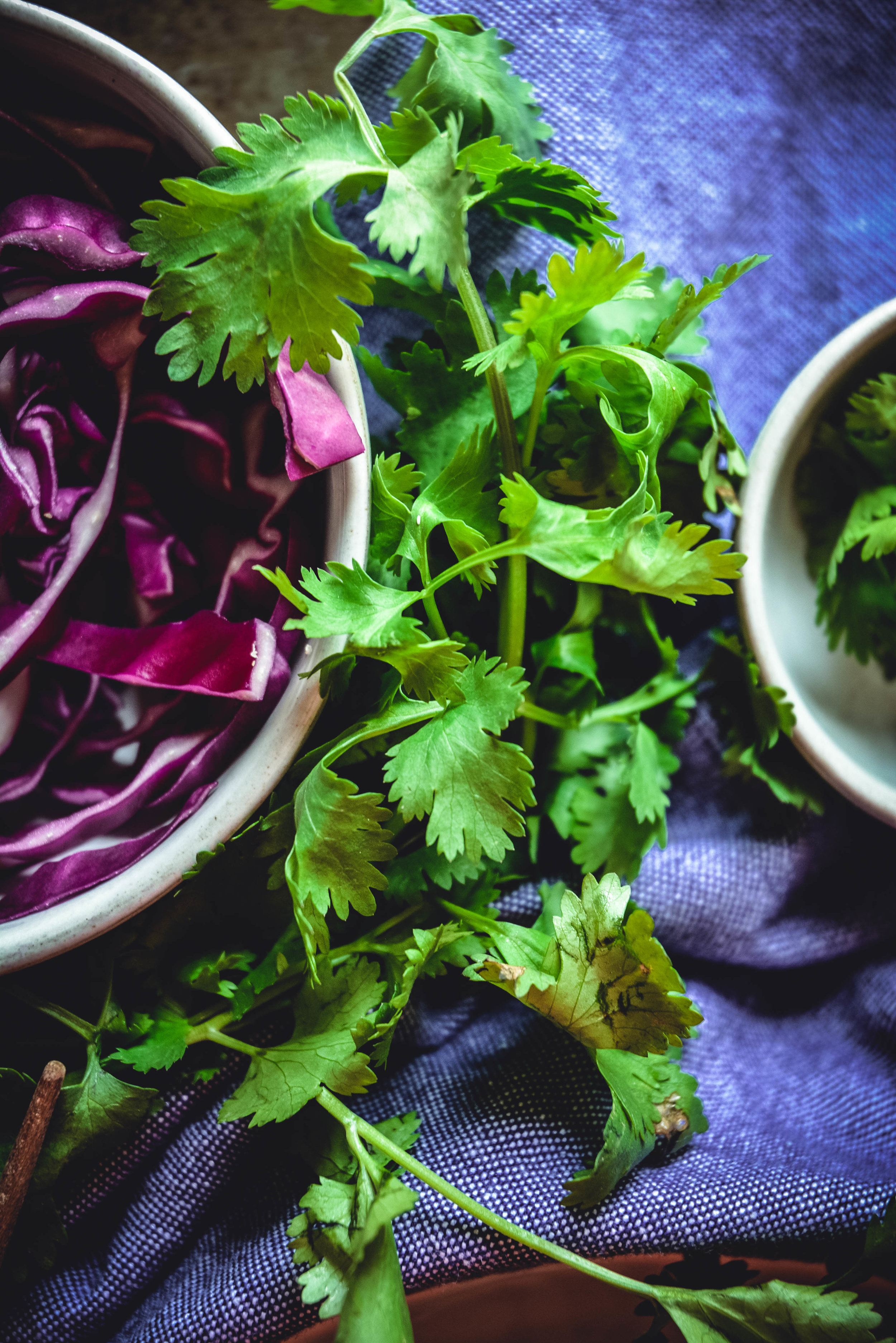 red cabbage and cilantro