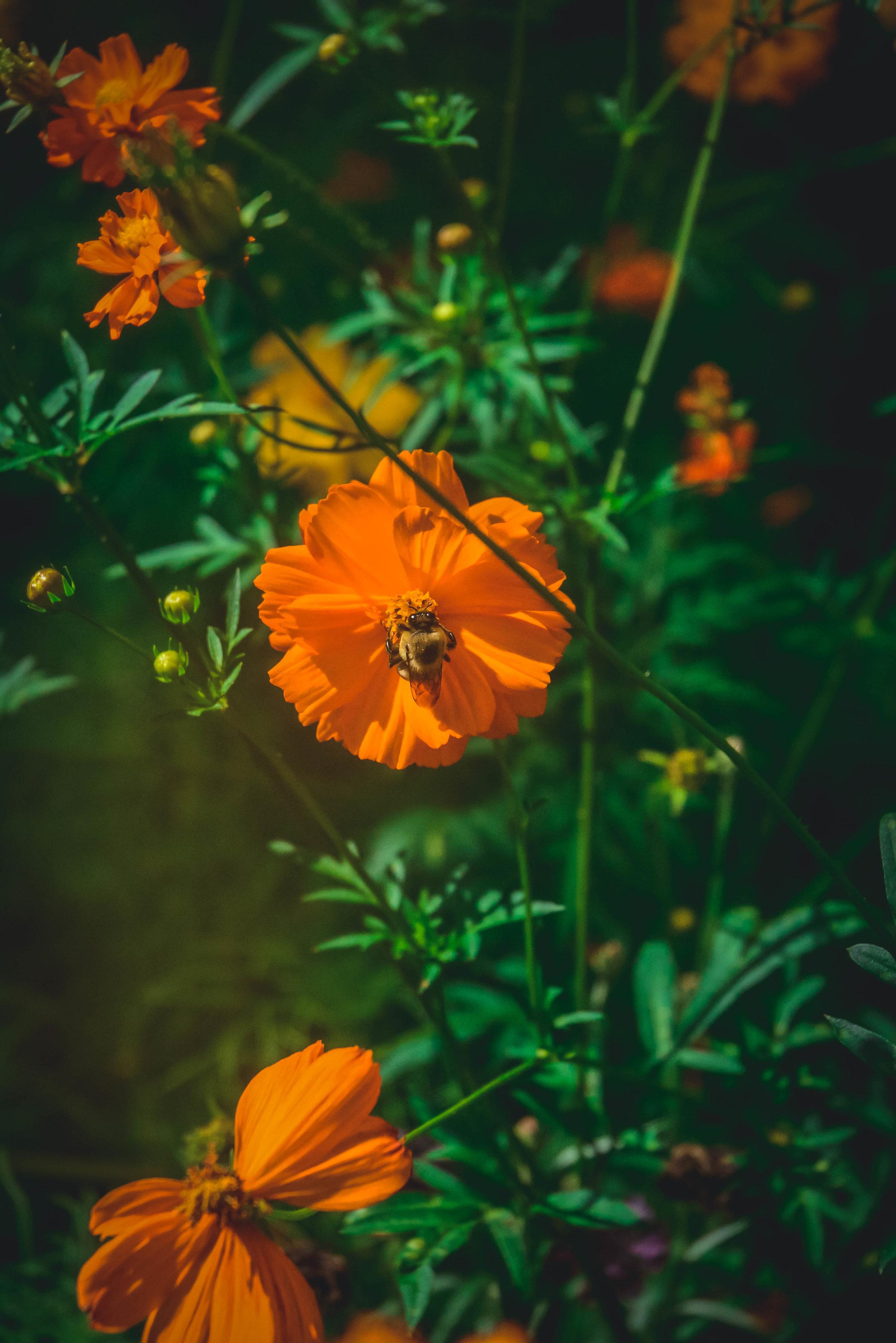 orange wildflower and bee