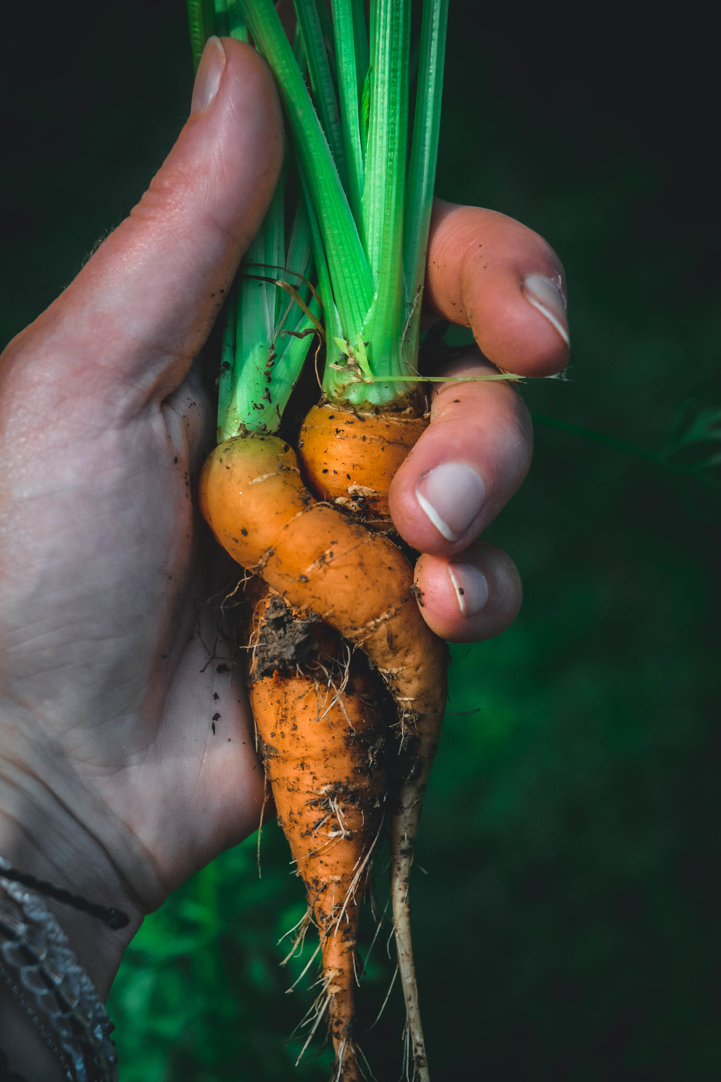 hand and carrots
