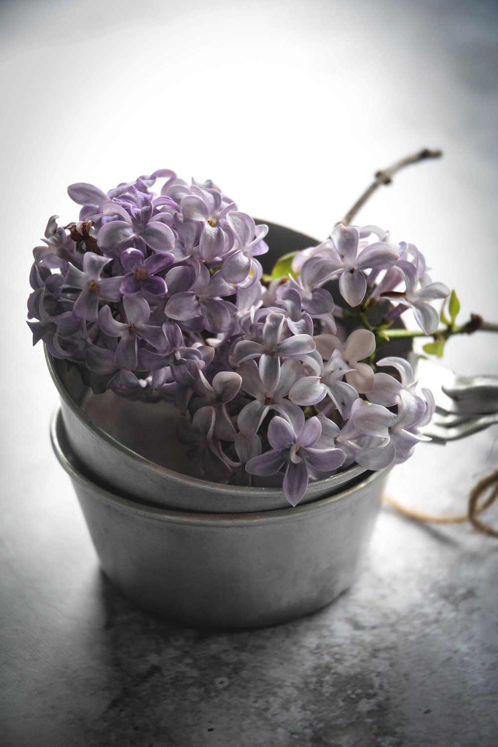 lilac-2.jpg