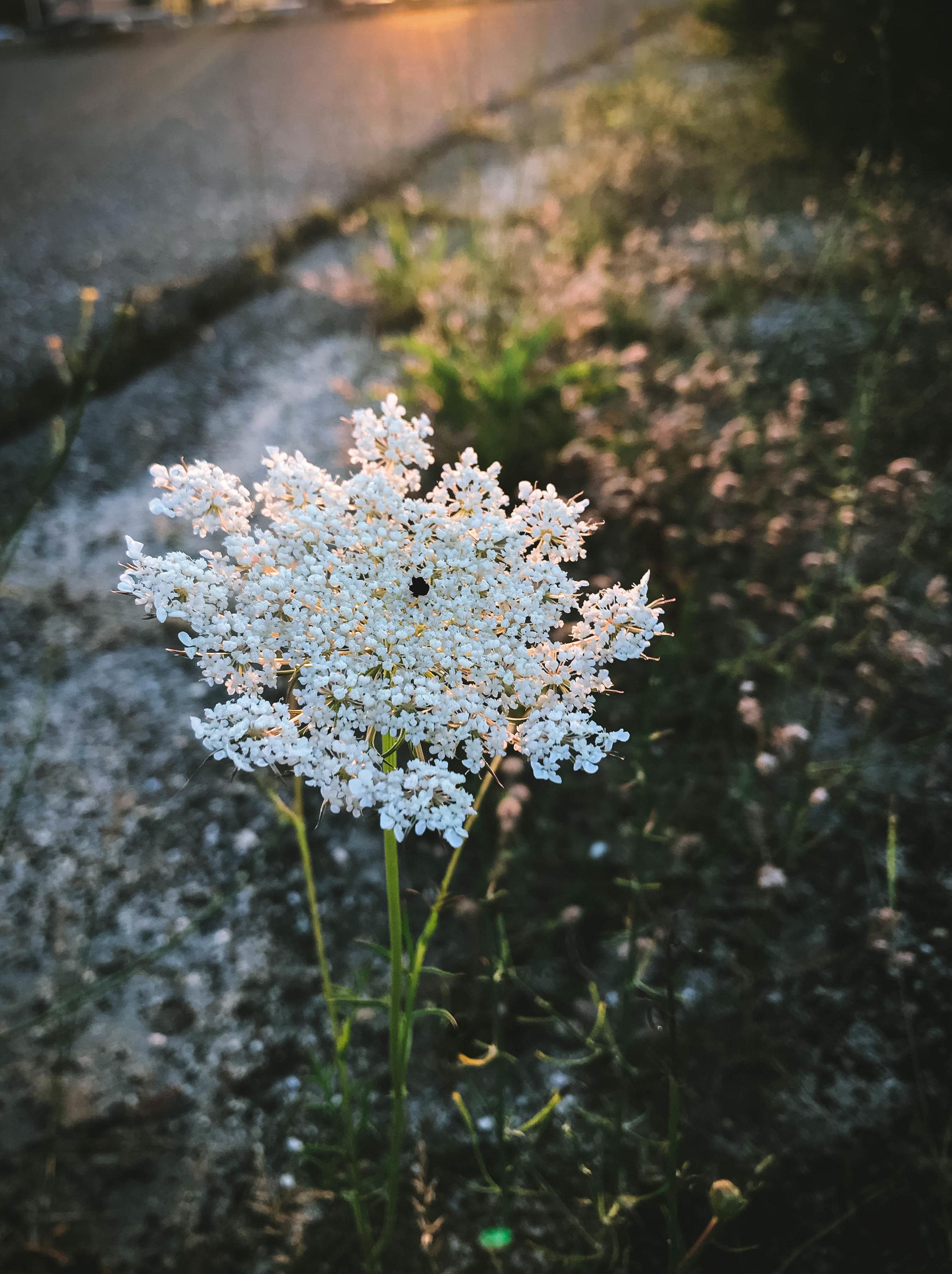 beach flowers-4.jpg