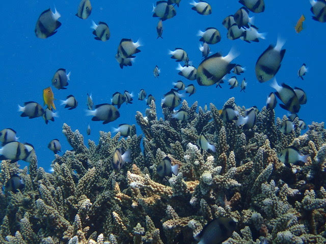 Corals 3.jpg