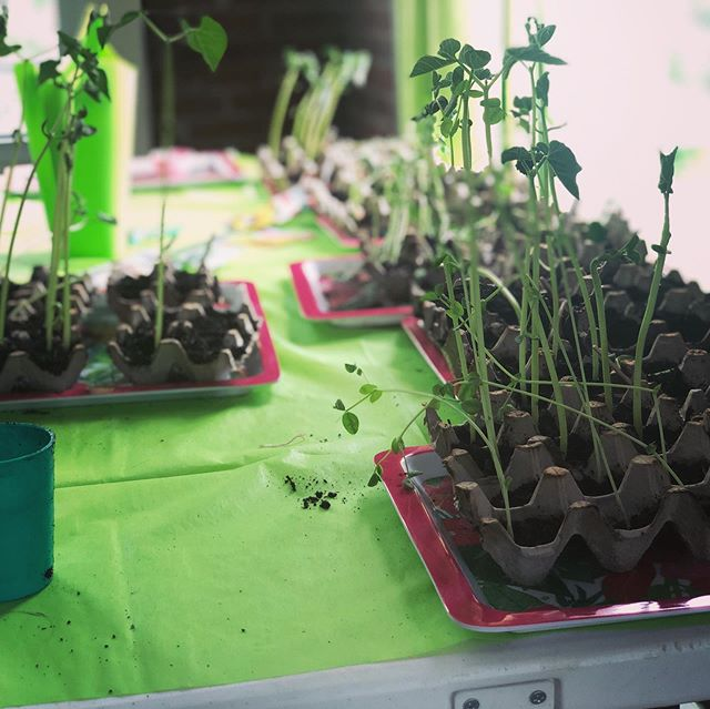 Crossing Kids recently learned about planting seeds...what better way to illustrate than to actually plant seeds!  There is room for your kiddos in our safe, secure learning environments. Learn more at https://greenvalleycrossing.church/kids-ministry