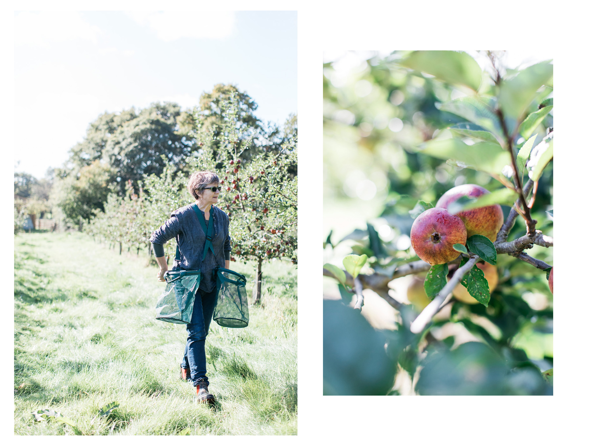 Photographs documenting a few hours in the life of apple season for Silly Moo Cider at Trenchmore Farm.