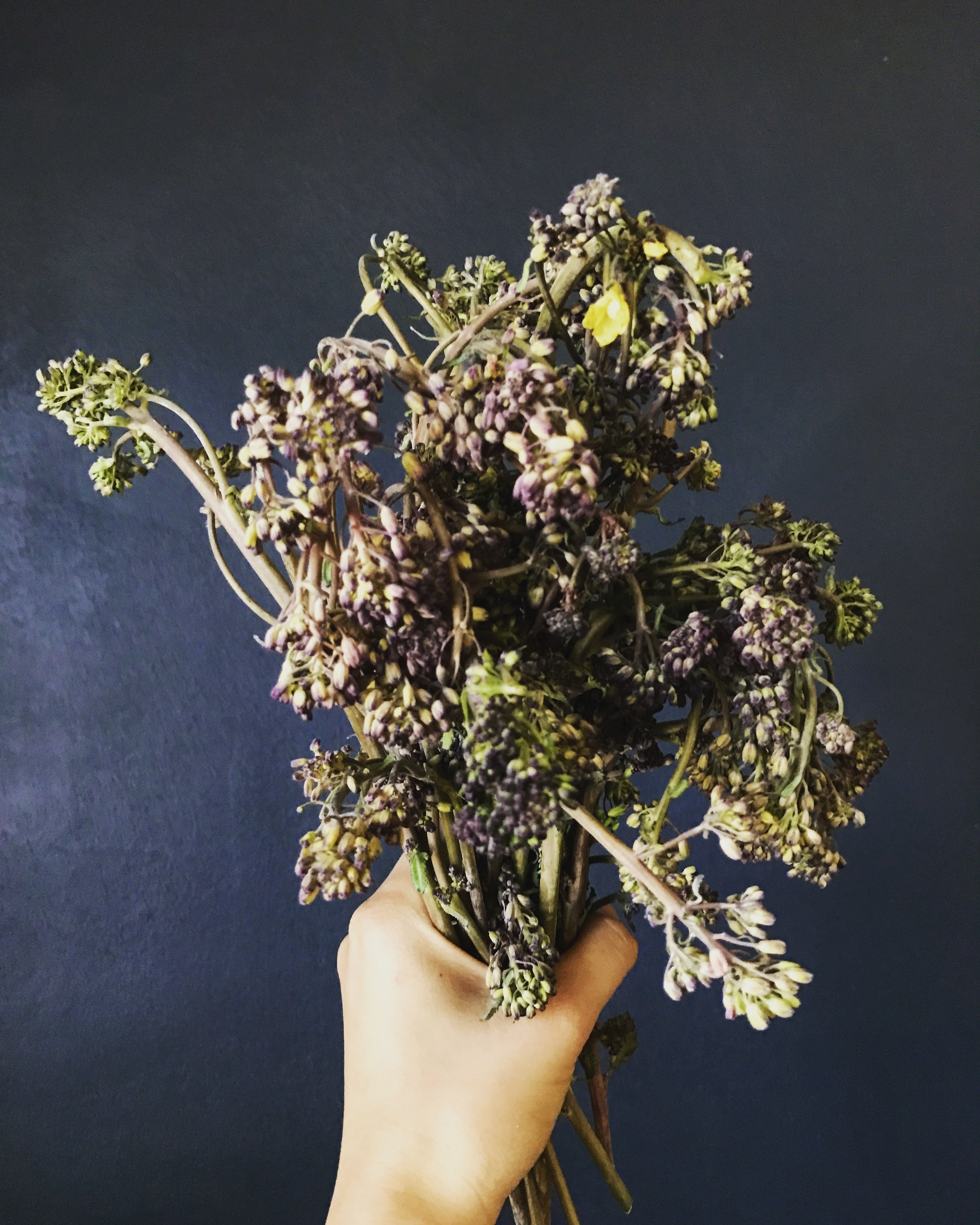 FYI, this is purple sprouting broccoli.