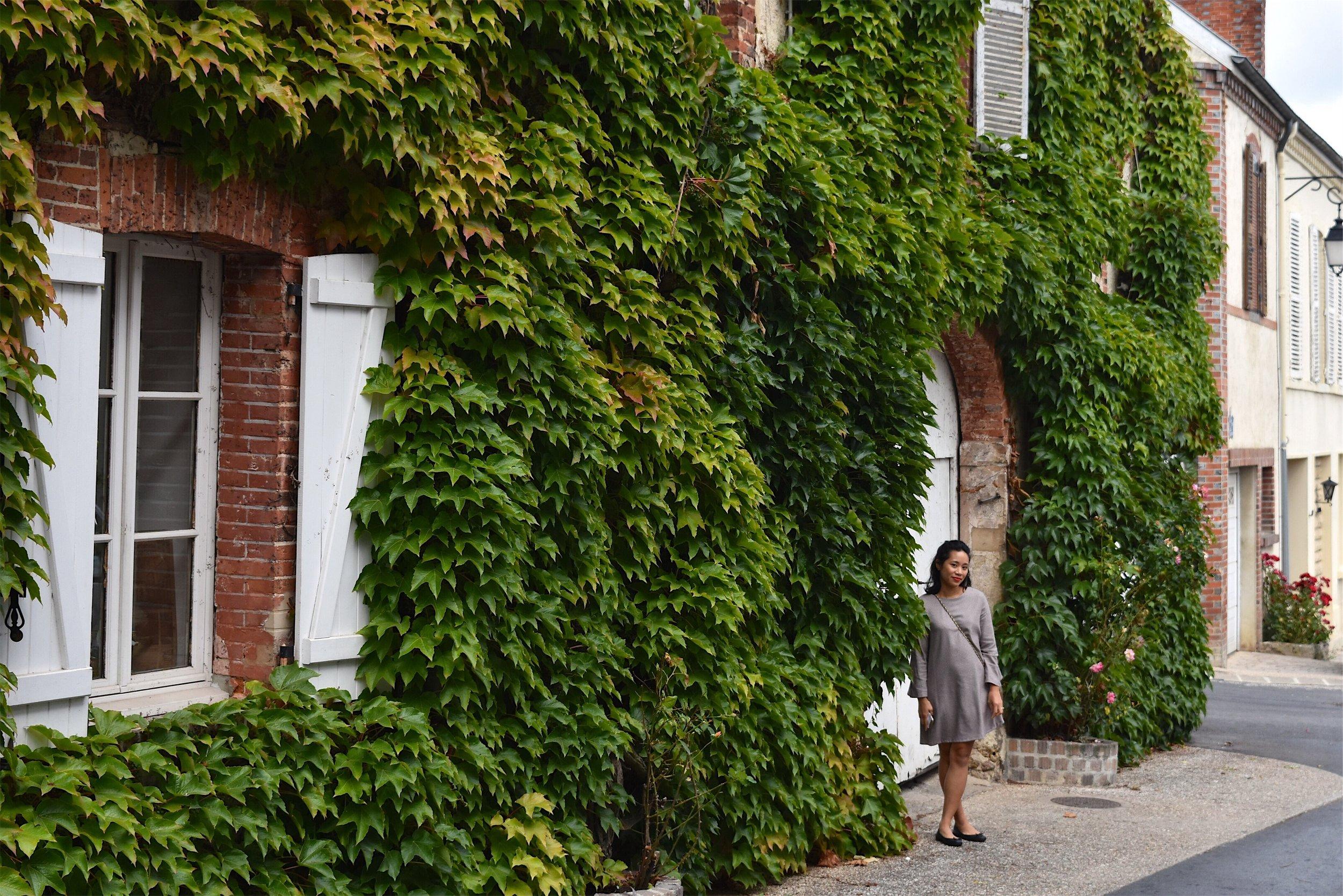 Ivy walls of Hautvillers