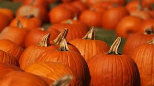 The Benefits of Pumpkin Seed Extract for Hair and Skin -