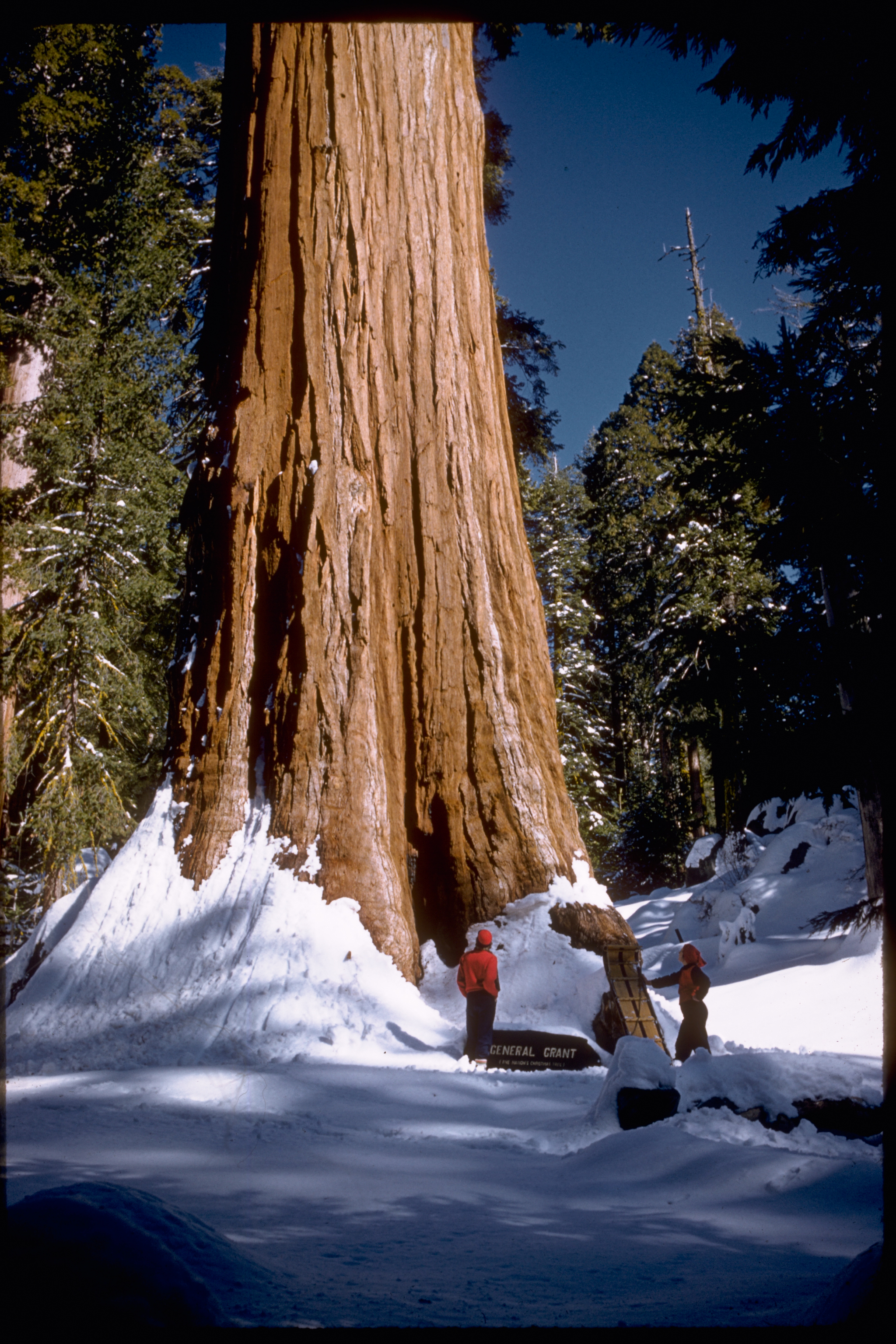 Sequoia_and_Kings_Canyon_National_Parks_SEKI2211.jpg