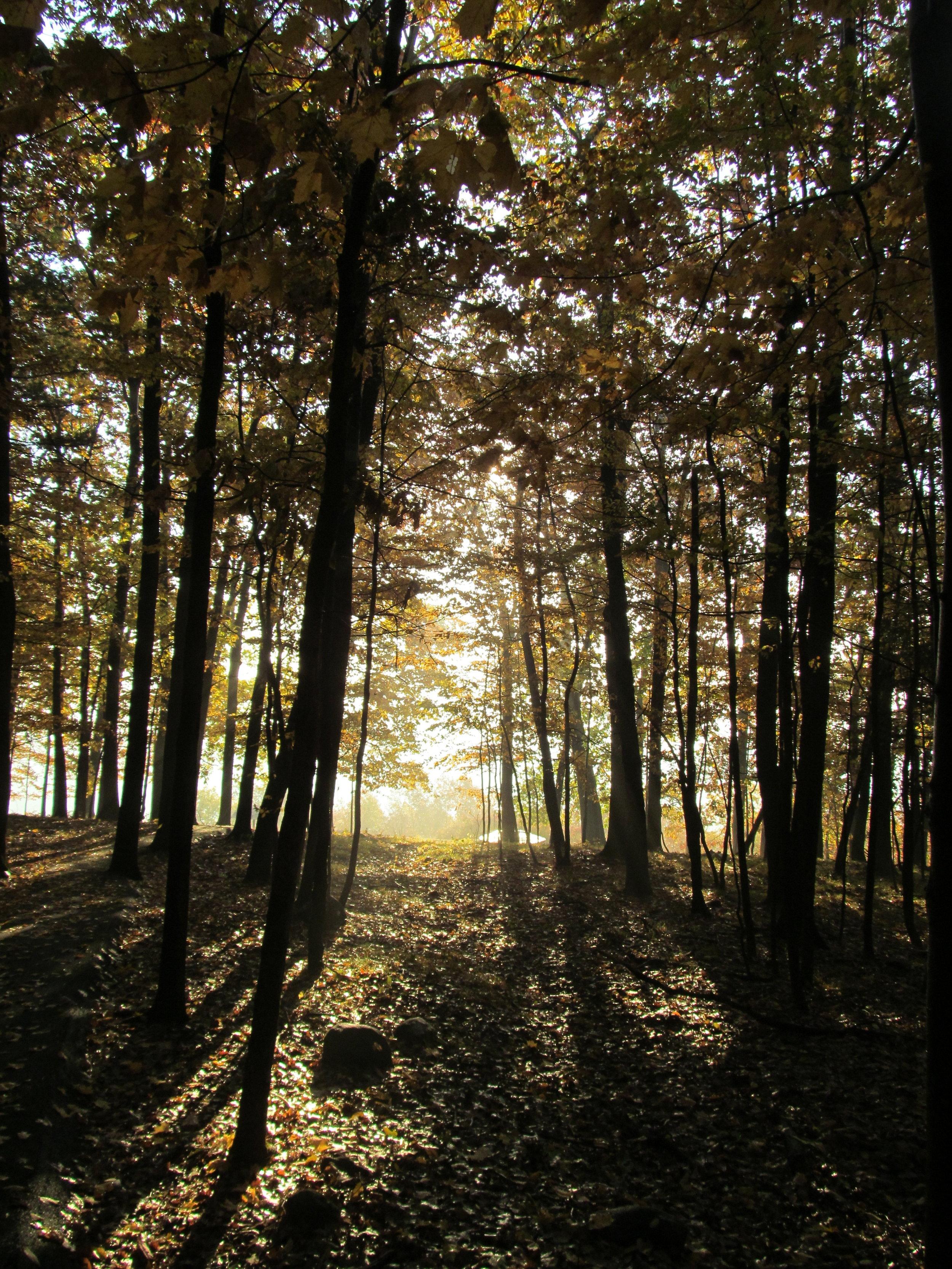 Mt. McGregor Forest.JPG