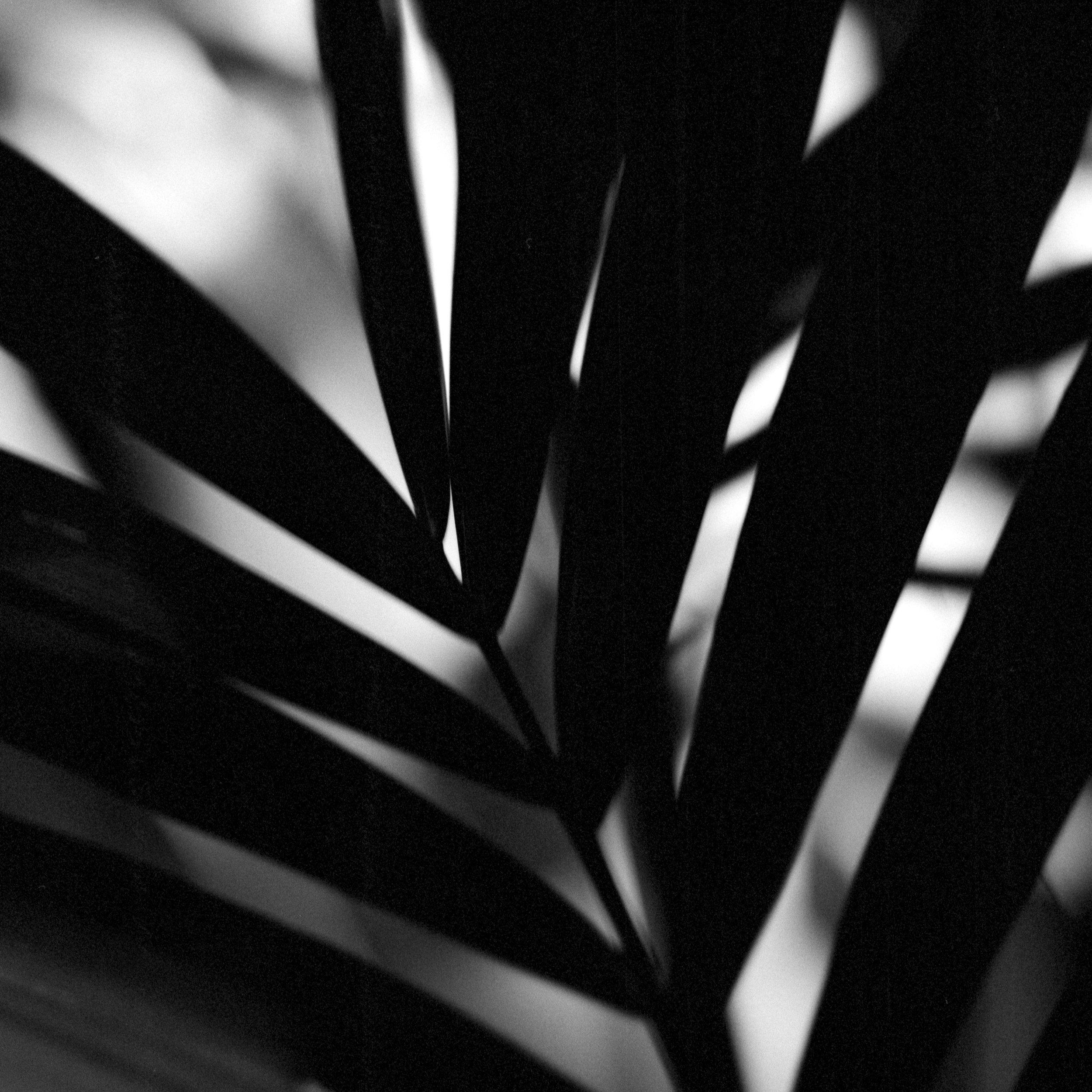 Week 42 - Flora-009.jpg