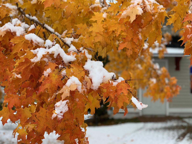 Lake Ontario's first winter snow