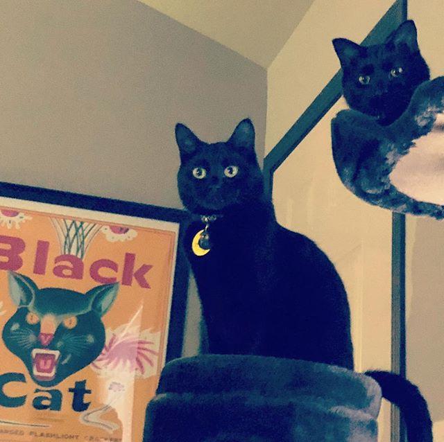 Pip & Ouija ♥️😻 #blackcat #blackcatsofinstagram #catsofinstagram #ouija #superstition #blackcatlove #cats #kittycat #kitty #cat #catcondo