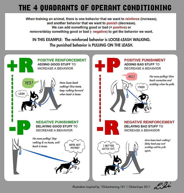 4 q's of operant conditioning.jpg