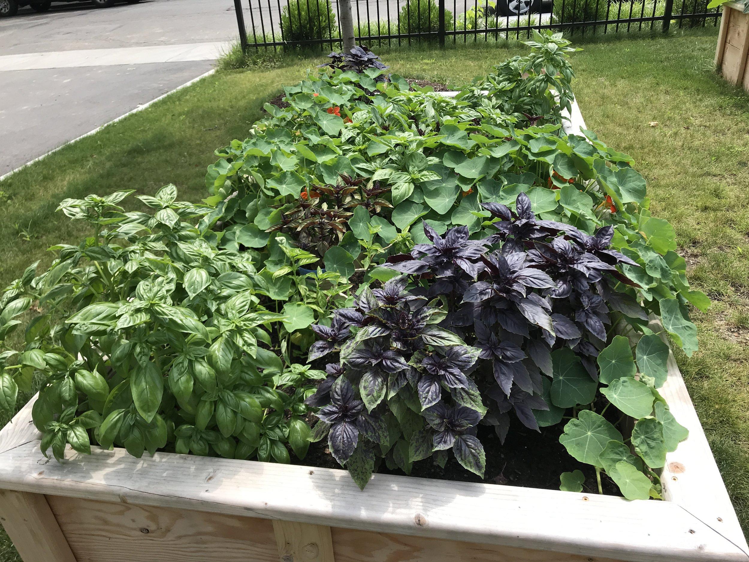 Our blooming veggies