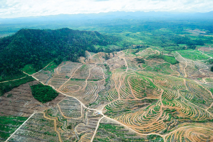 Palm Oil.jpg