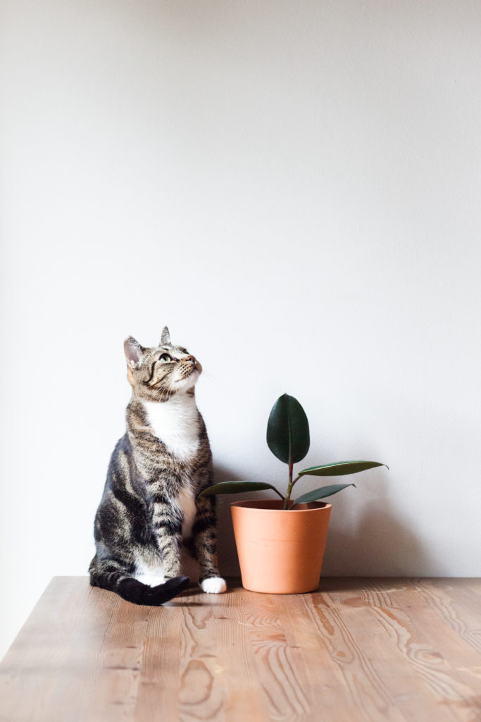 For now, this plant will have to do.