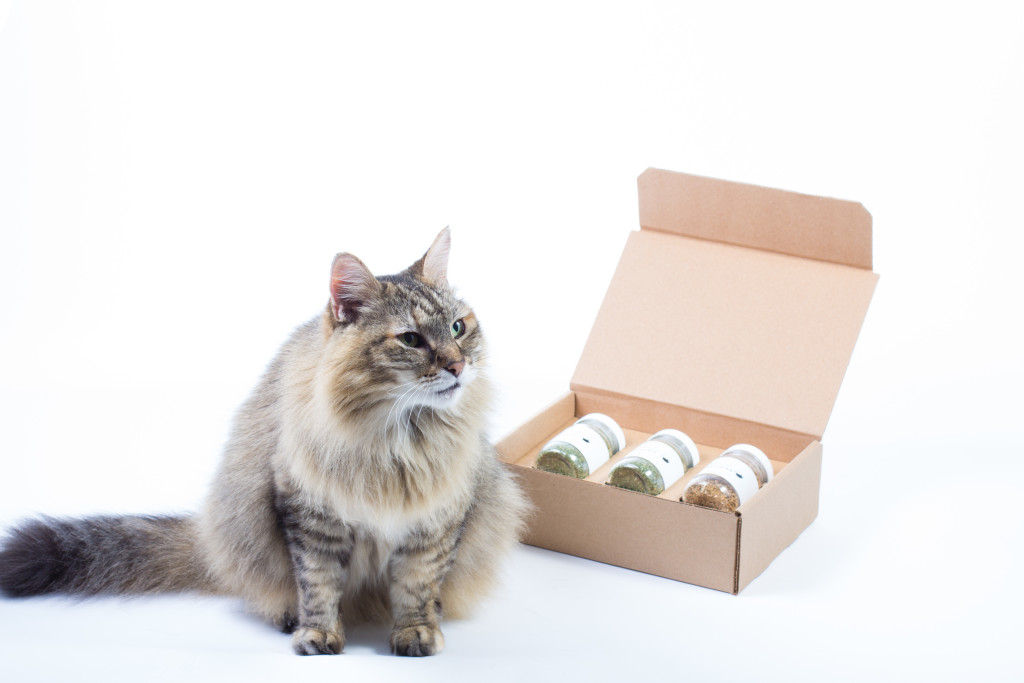Mixed-Set-with-Cat-Image-1-1024x683.jpg