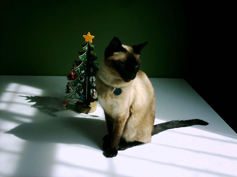 800px-Christmas_cat_1.jpg