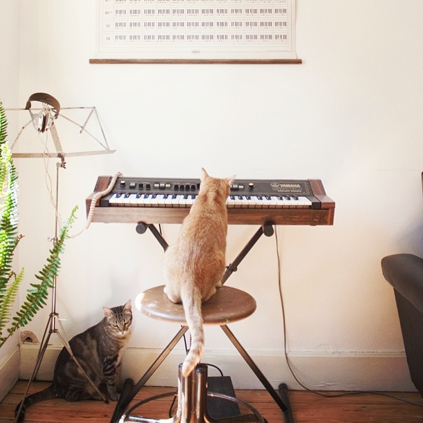 Pipo_playing__Jojo_listening__Cat_playing_keyboard.jpg