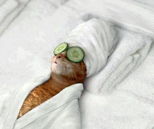 cat-cucumber-eyes-e1433112580436.png