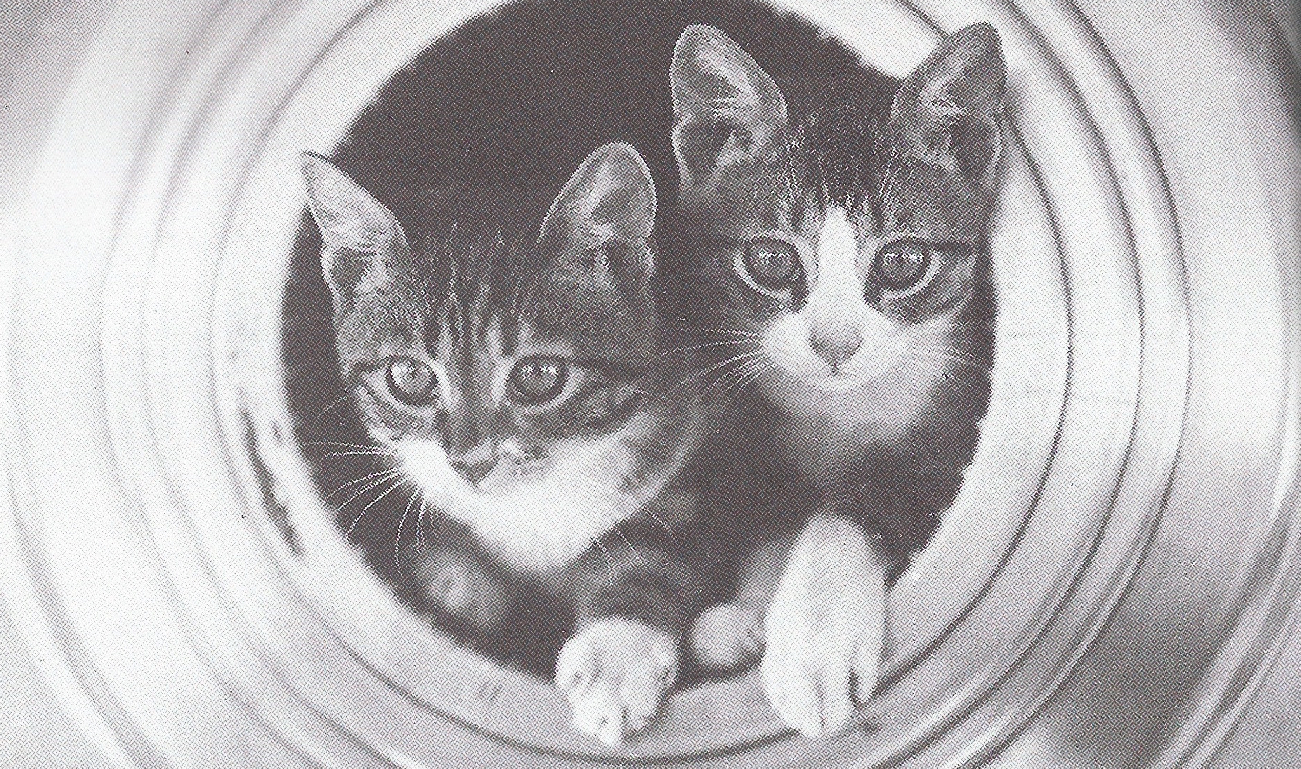 kittens-in-canons-featured-pic-cropped.jpg