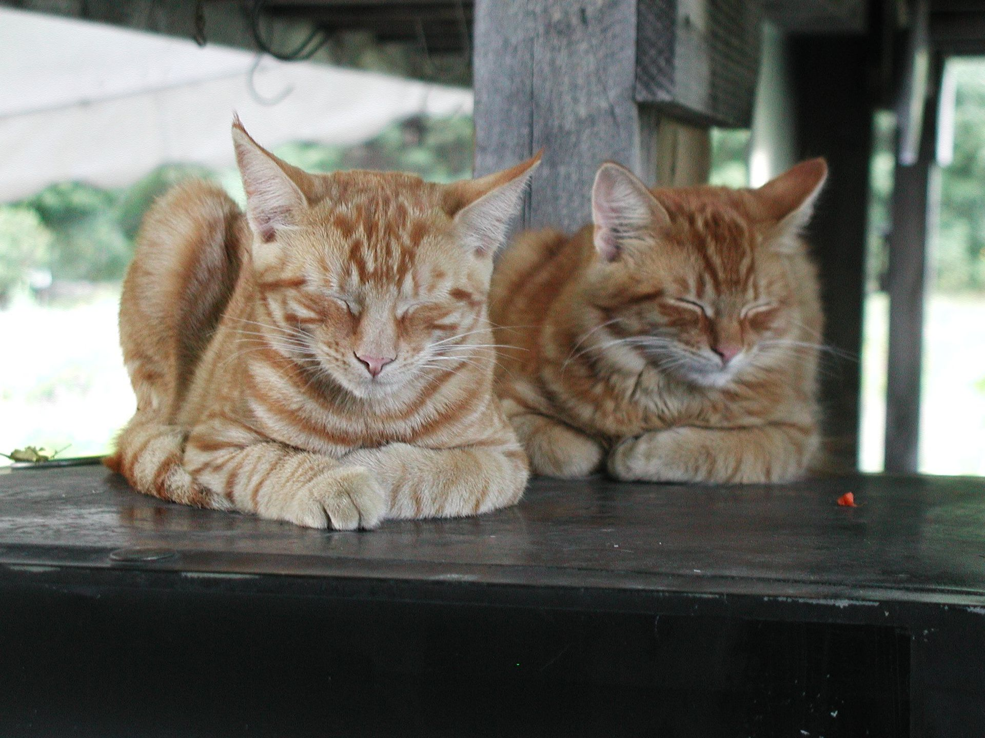 Double-snooze-loaves.jpg