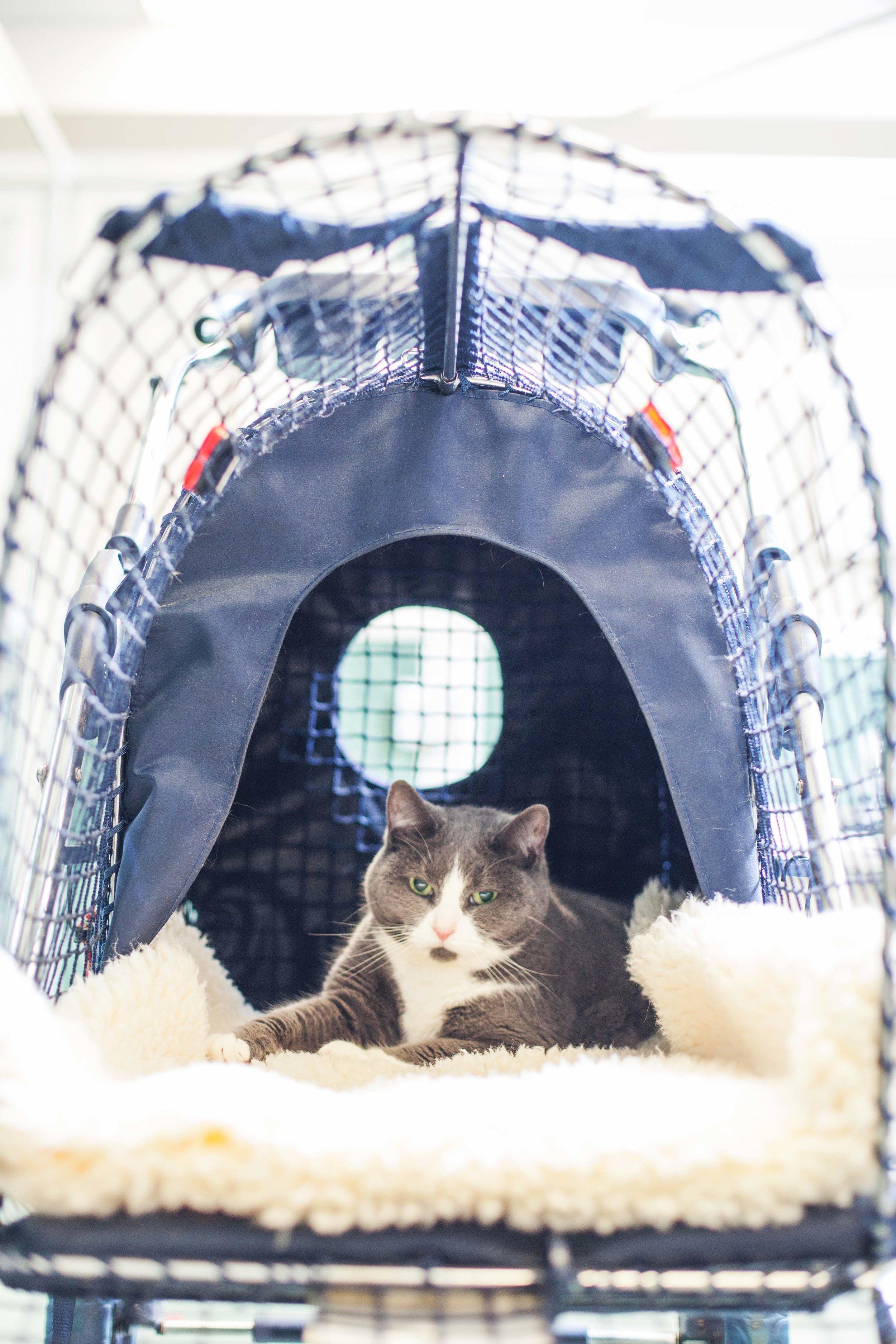 """A guest enjoying an outdoor """"Kitty Walk"""" in a stroller"""