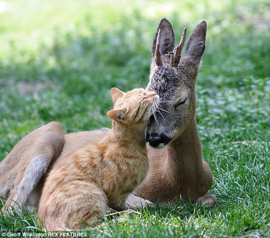 deer-friend.jpg