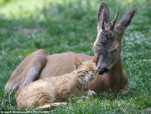 deer-friend3.jpg
