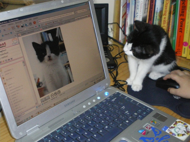 Cat_stares_at_itself_on_computer_monitor.jpg