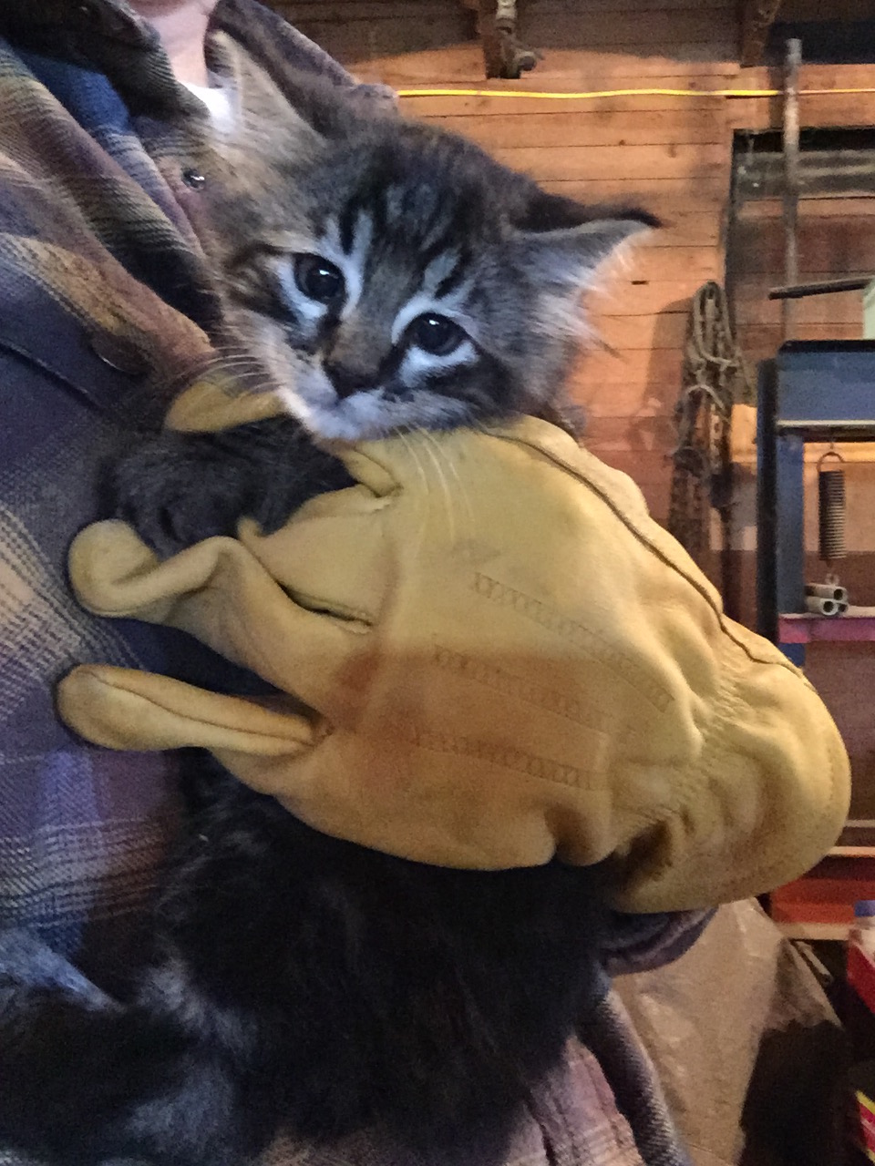 Barn cat no more!