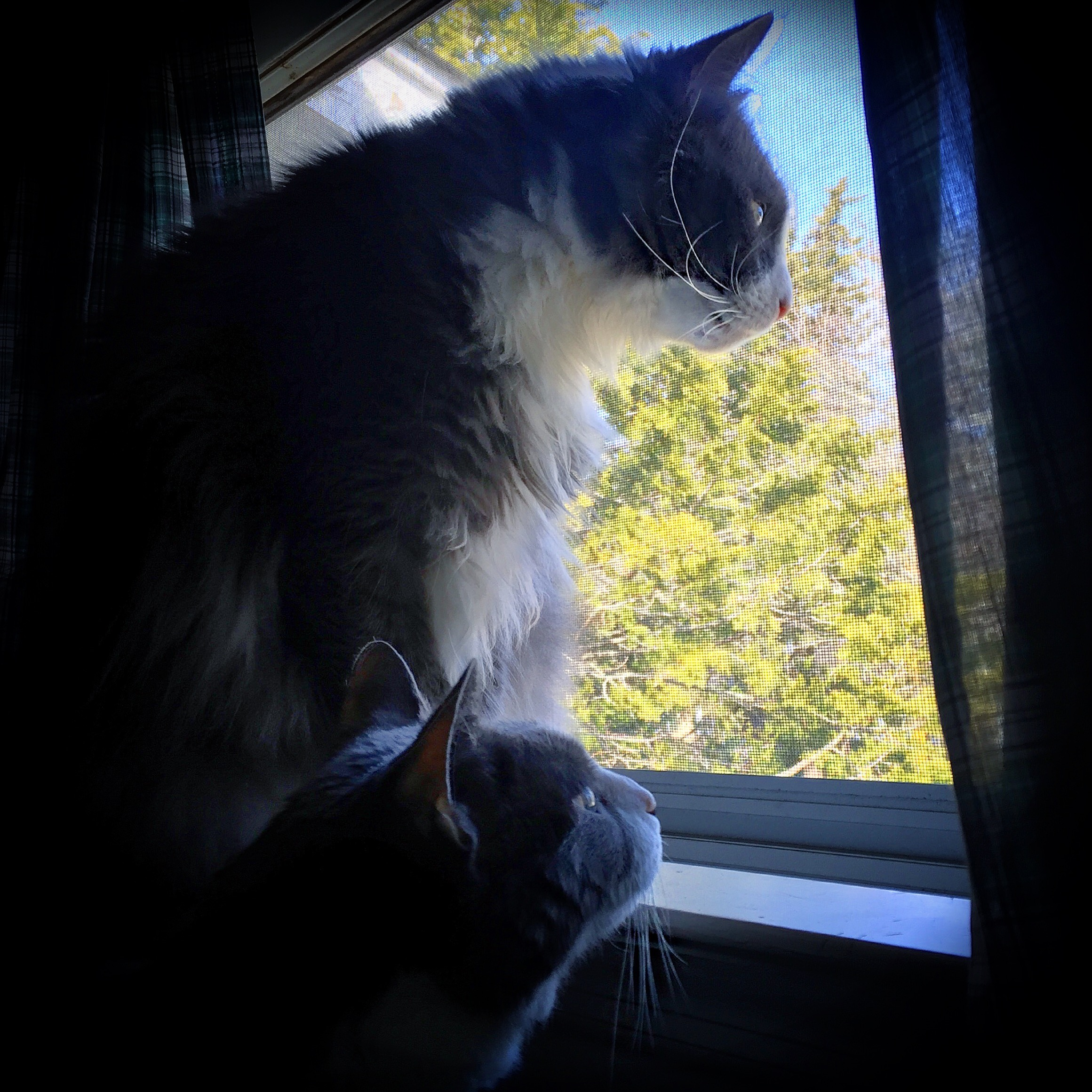 Reliving outdoor adventures from the safety of the window