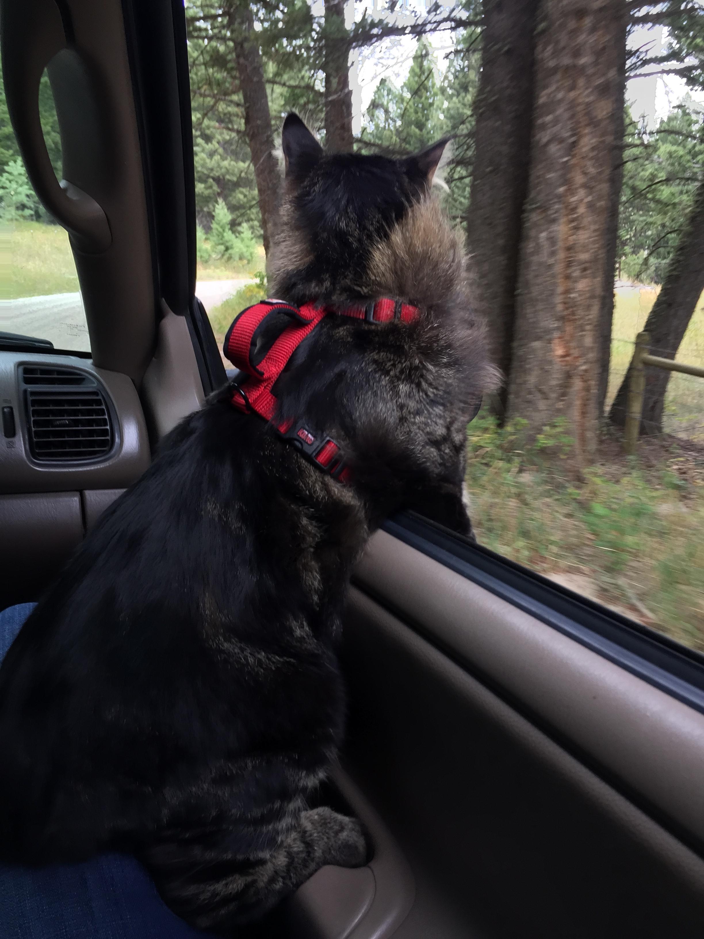 Car rides are da best!