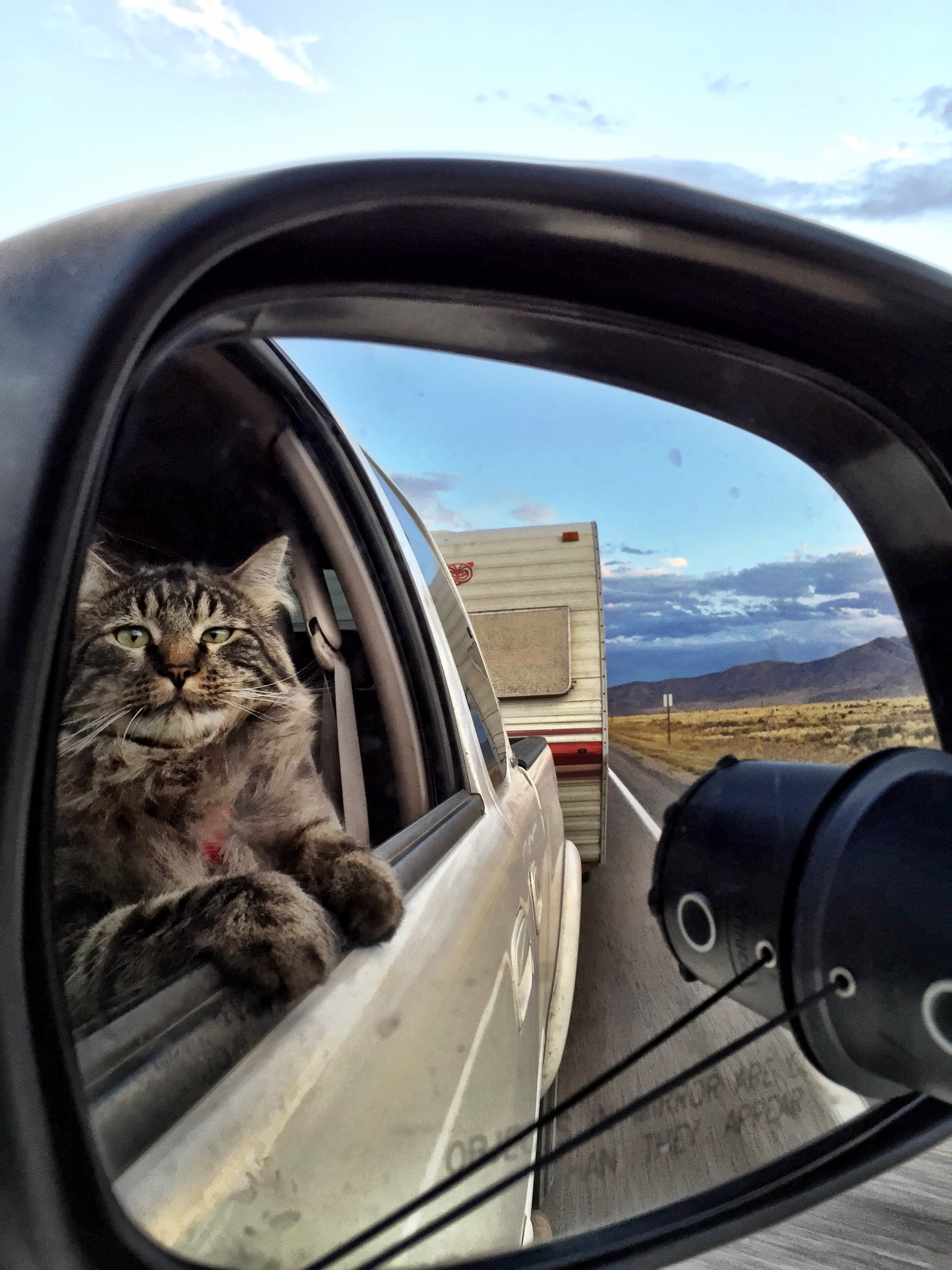 """otie-car-cat""""Riding in cars with cats"""""""