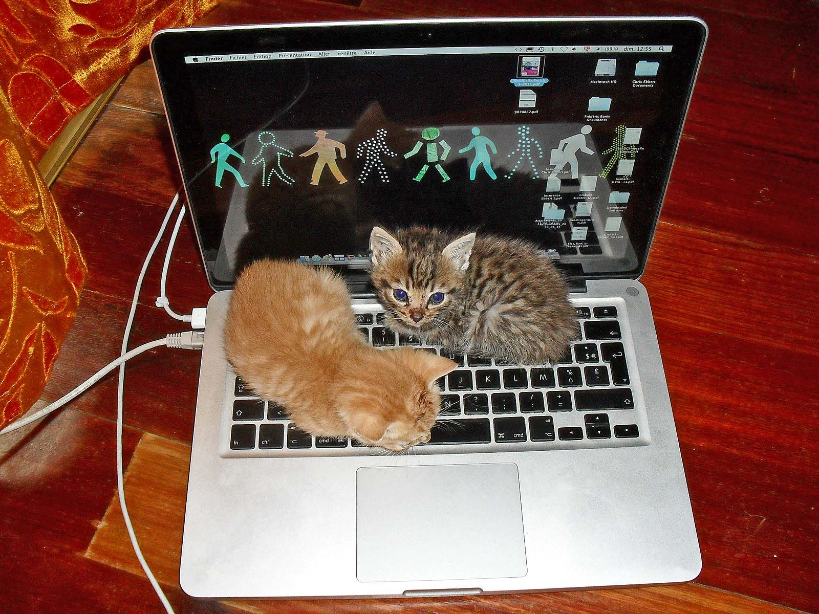 Kitten_Laptop.jpg