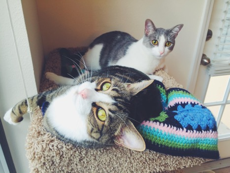 Because its my cat tree, I get the best window seat. Either way, Emory was still pretty cozy on my crochet cat mat humom made me!