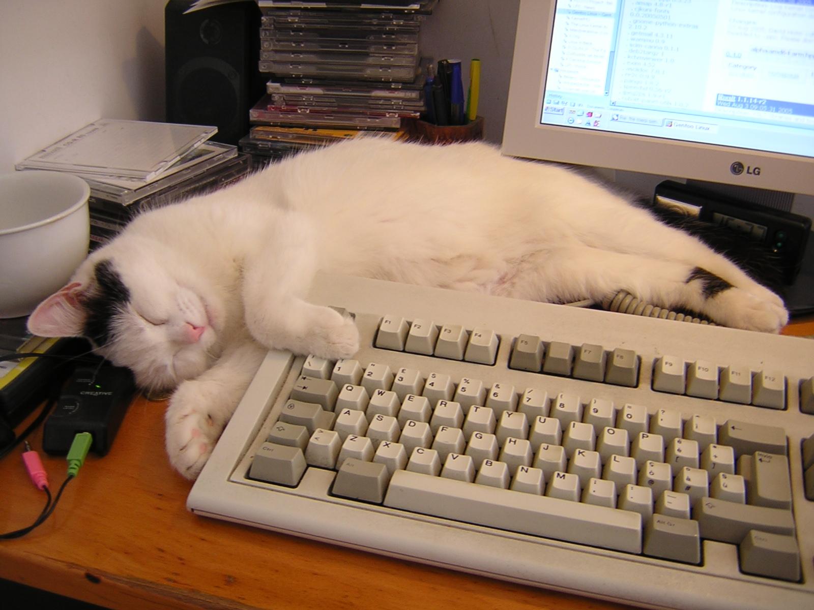 Sheila_the_PC_cat.jpg