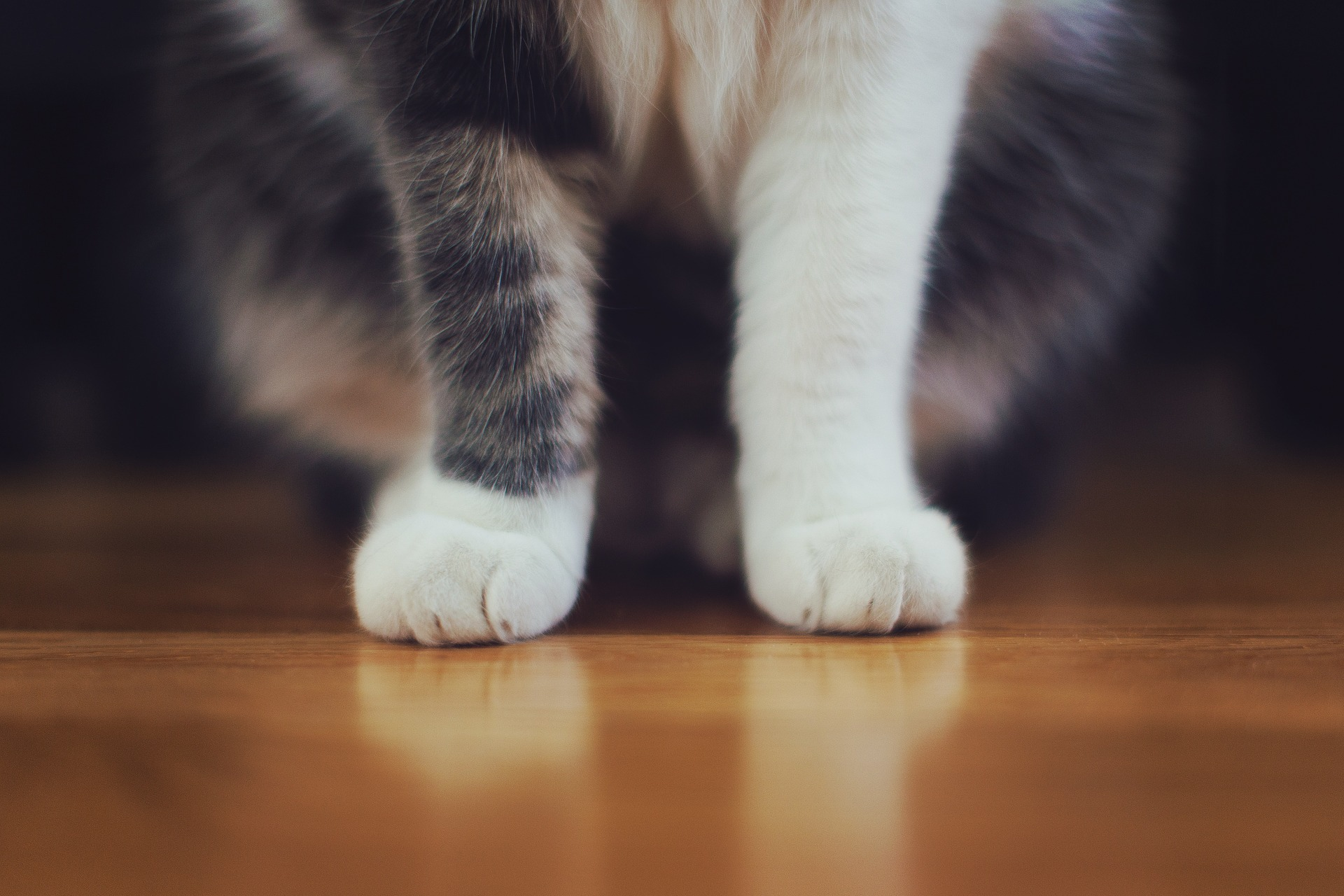cat-698593_1920.jpg