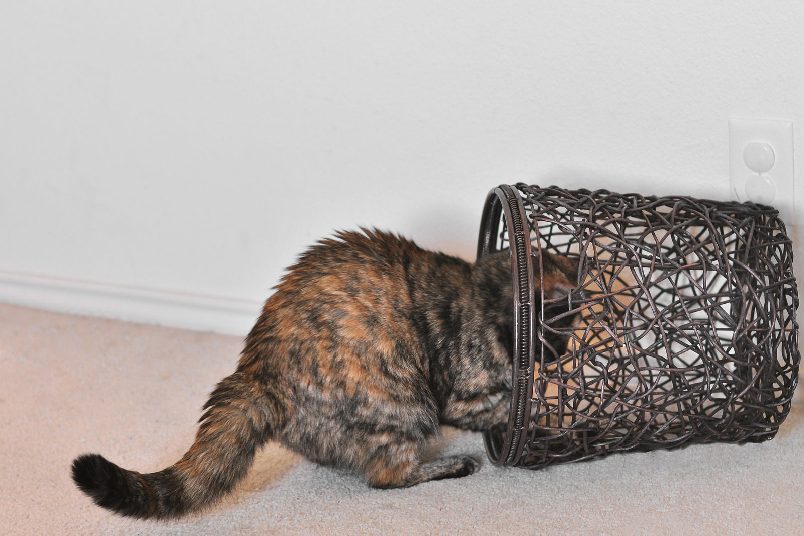 1599px-Abby_playing_in_basket.jpg