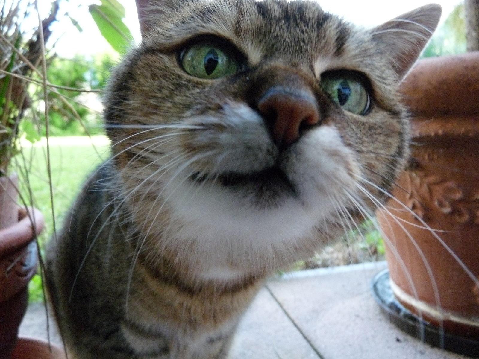1600px-Neugierige-Katze.jpg