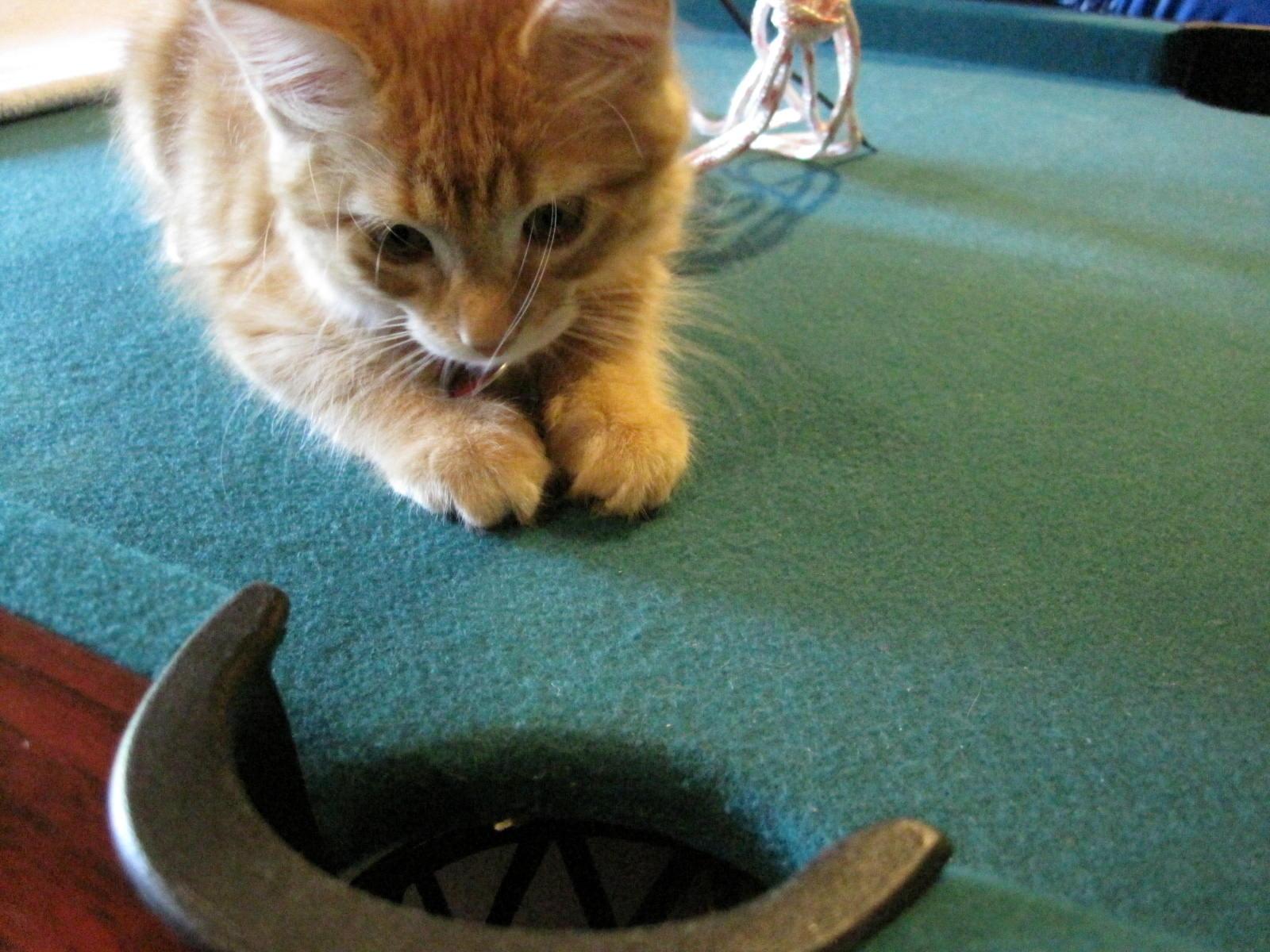 CatWaitingForSomething.jpg