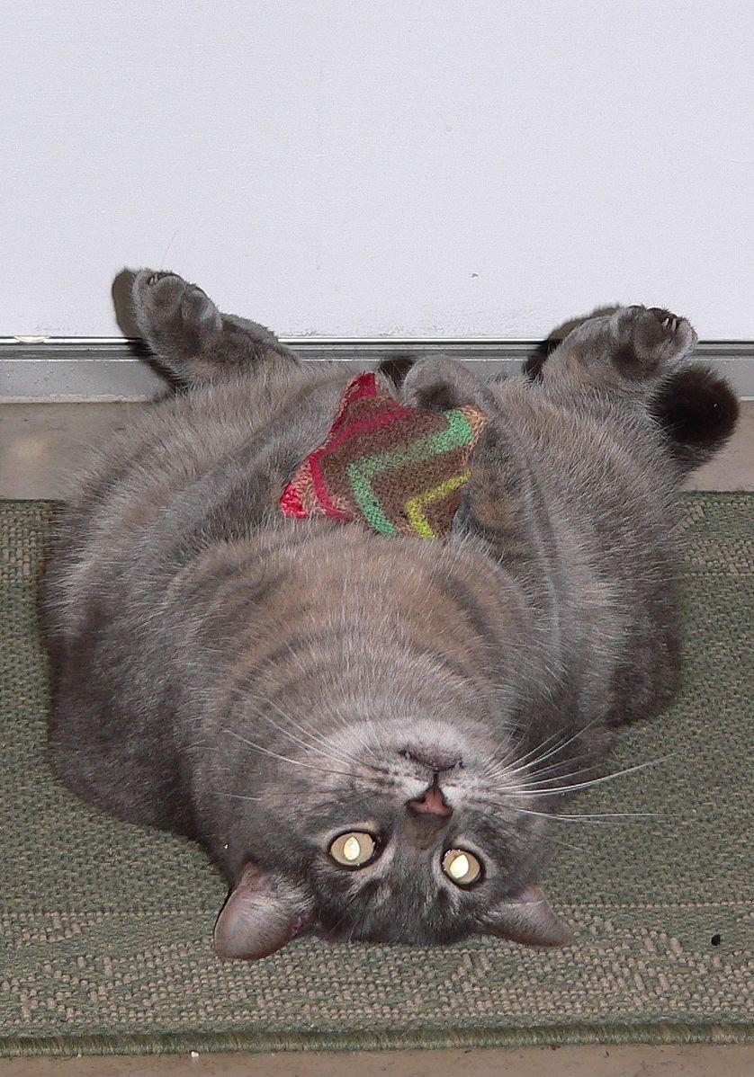 Cat_on_back.jpg