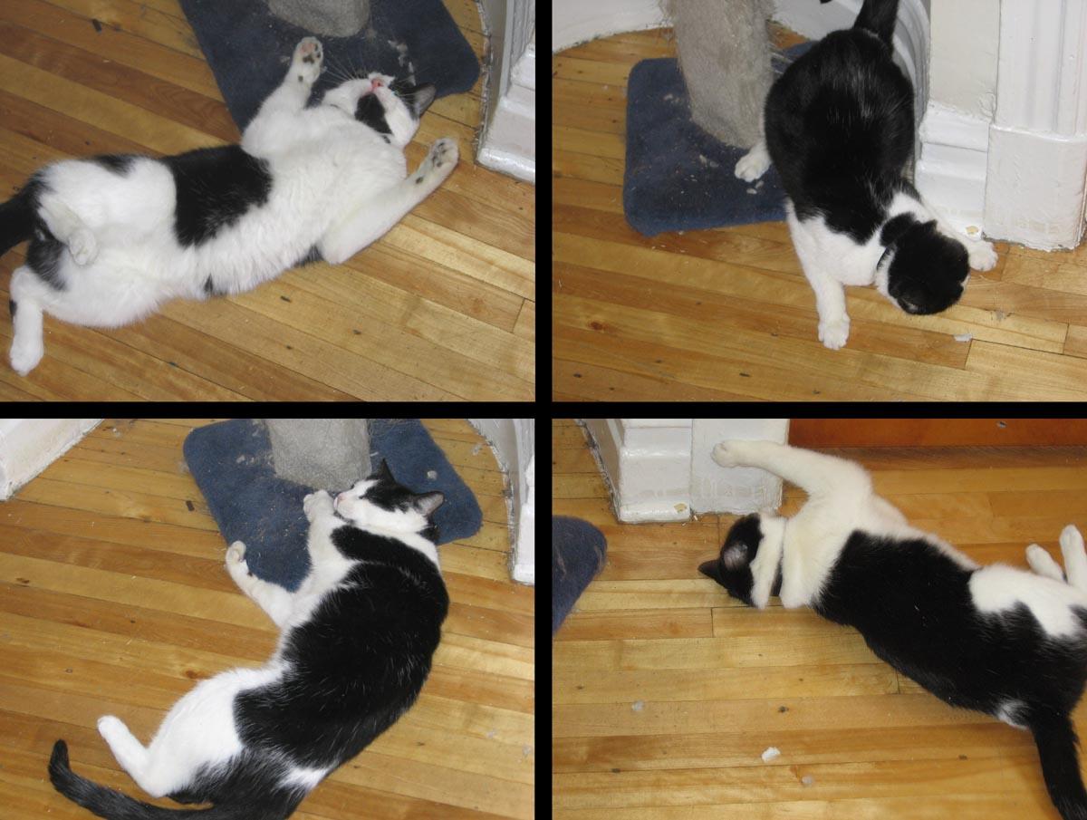 Catnip-effects.jpg