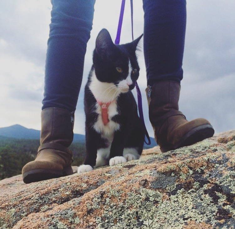 Adventure catting is the life for me!