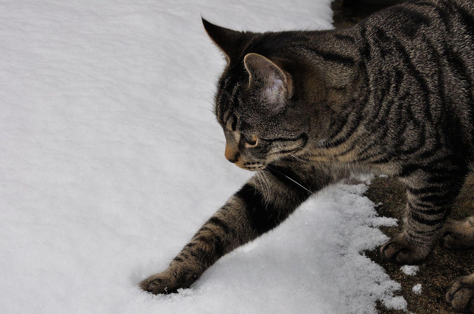 The_first_snow_8237187411.jpg