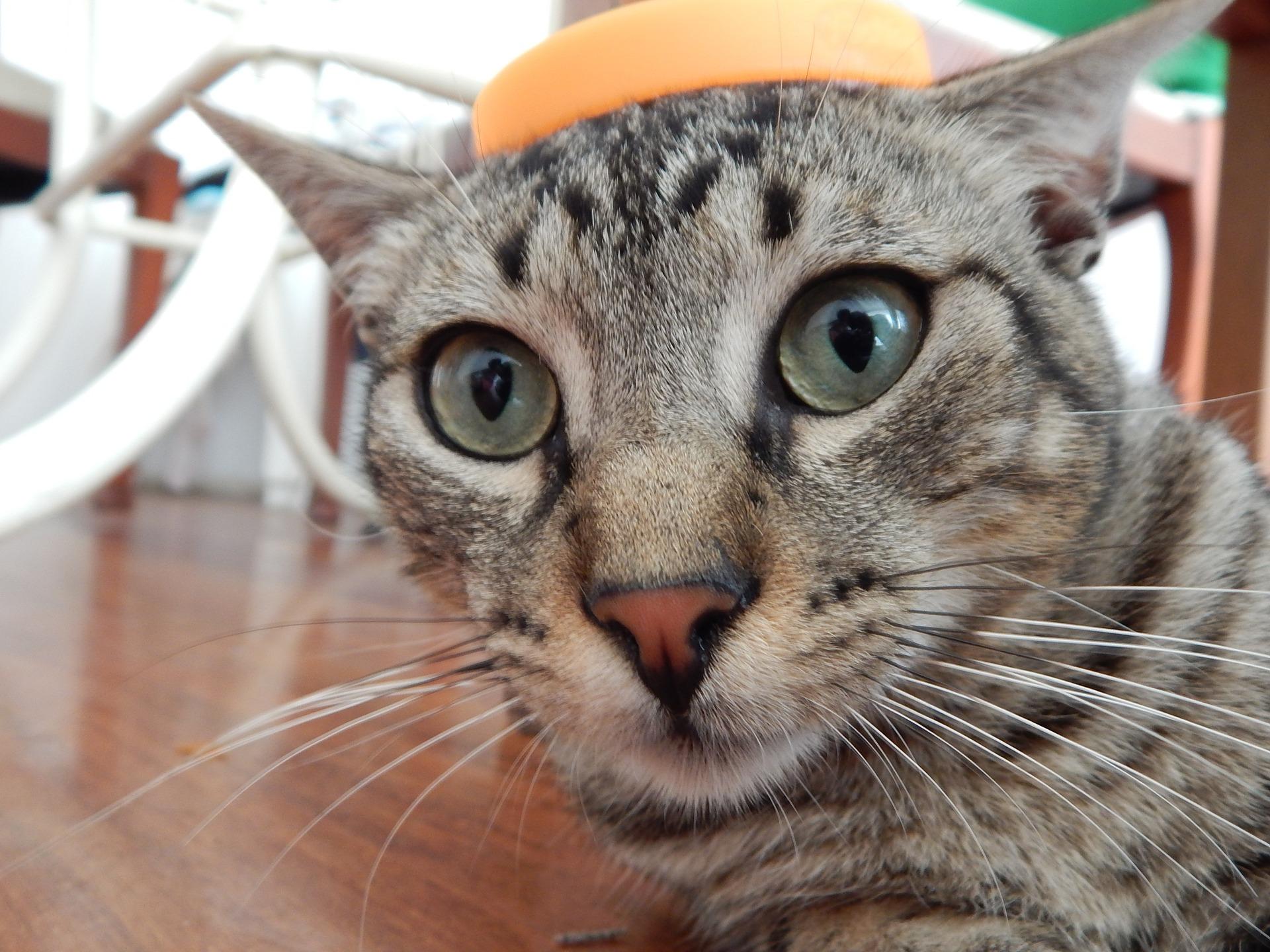 cat-633081_1920.jpg
