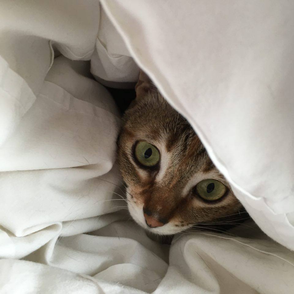 Hiding from the paw-parazzi