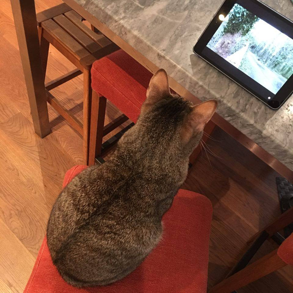 Birdwatching from the comfort of human's chair